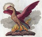 The Phoenix, a symbol of immortality, F. J. Bertuch (1747–1822).