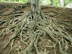roots 4 forest landscapes, Paolo Neo (Public-Domain-Photos.com)