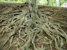 roots 4 forest landscapes, Paolo Neo (Public-Domain-Photos.com)