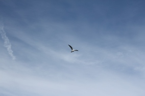 bird in flight